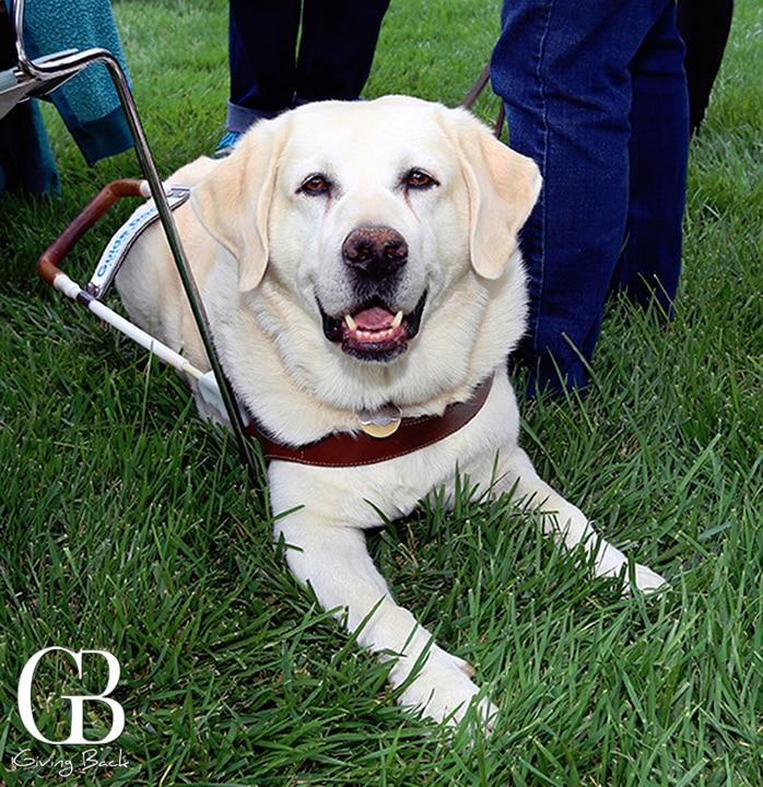 A real service dog  a true hero