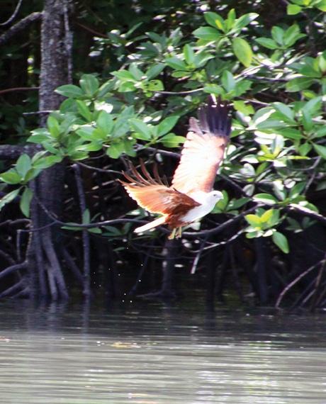 Langkawi Eagle.JPG