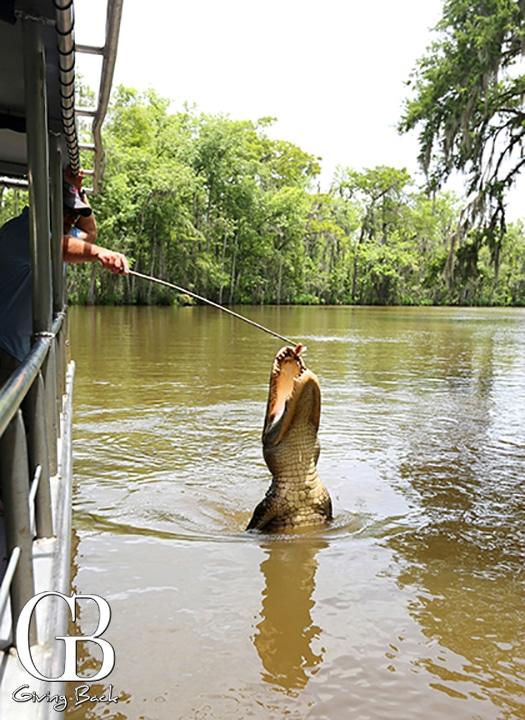 On the bayou