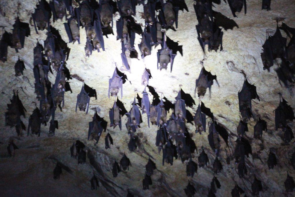 The Real Bat Cave.JPG