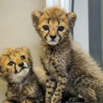 10 Things About Rolf Benirschke & San Diego Zoo Global