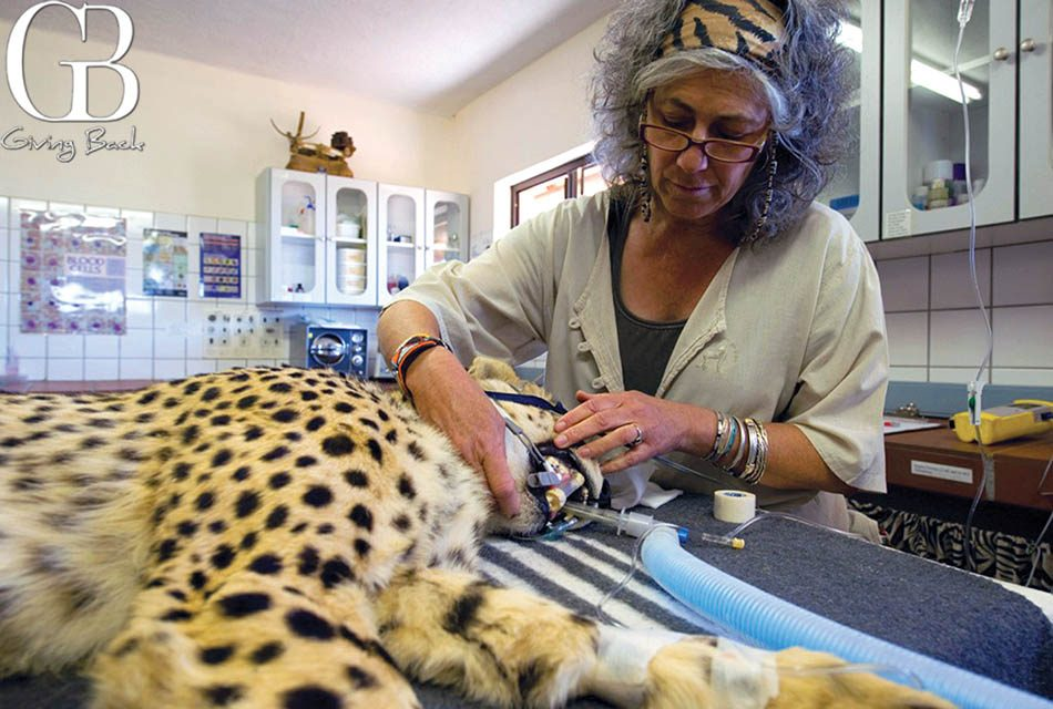 Cheetah Conservation Fund  Saving Cheetahs In The Wild